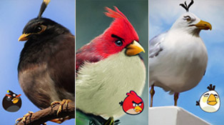 Angry-Birds_Realistic-Digital-art-photoshop-wonder