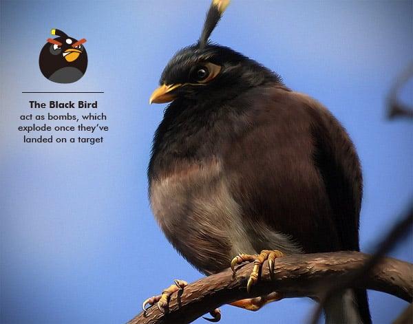 Black-angry-bird_Realistic-Digital-art
