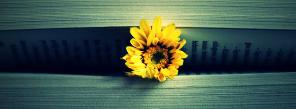 Yellow-Flower-book-Fb-Timeline-cover