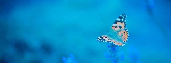 Blue-Fb-Timeline-Cover-Butterfly