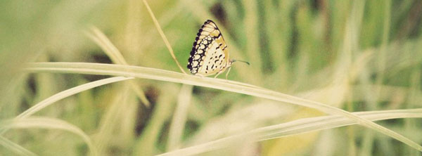 Butterfuly-Macro-Capture-Facebook-Cover