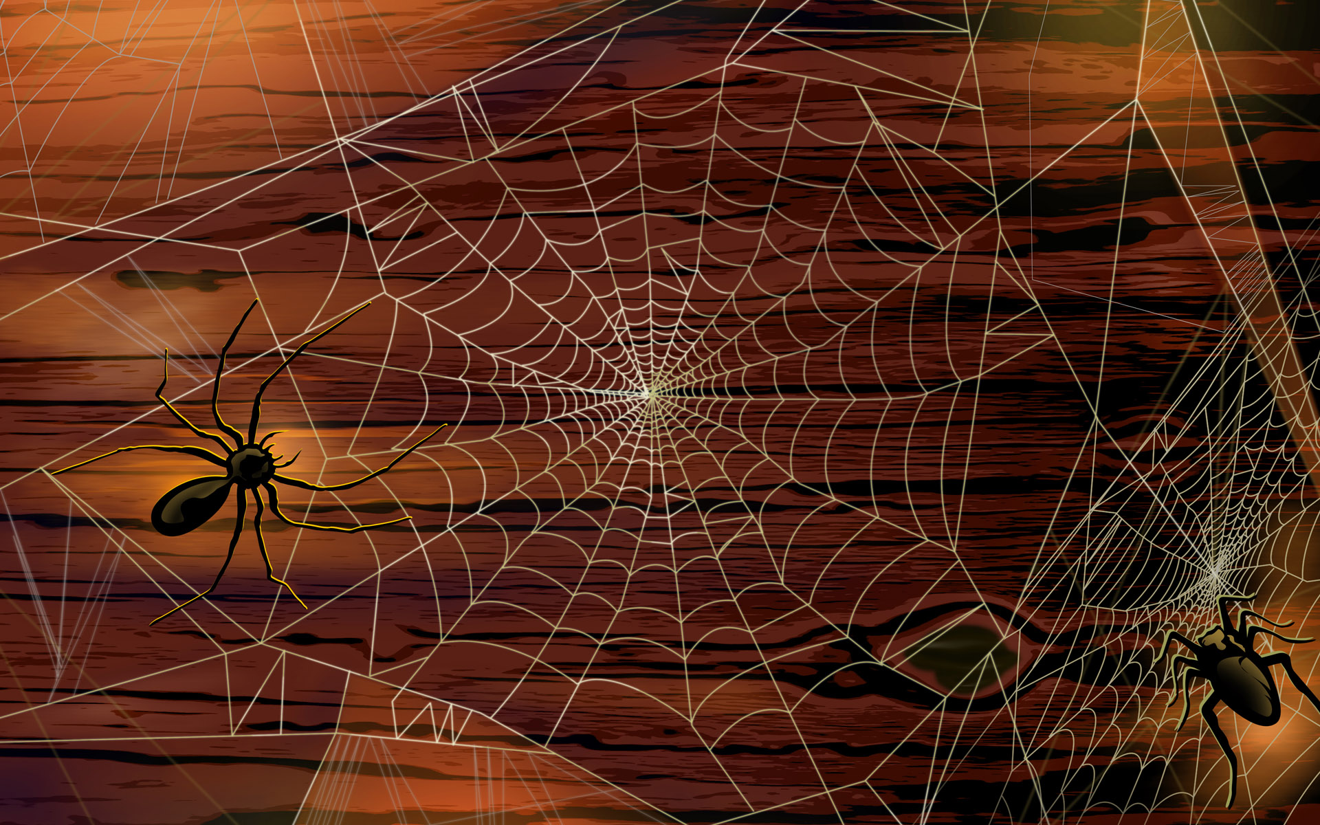 scary halloween 2012 spiders hd wallpaper 2 - Halloween Spiders