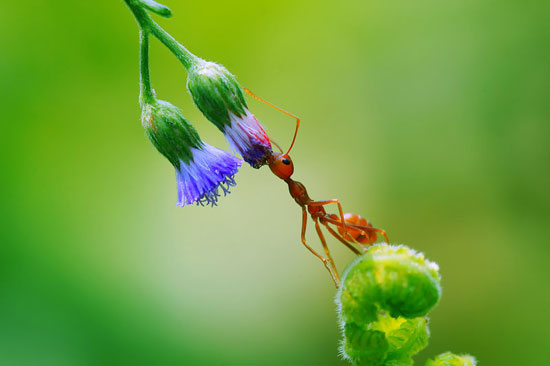 Ant-Macro-Photography