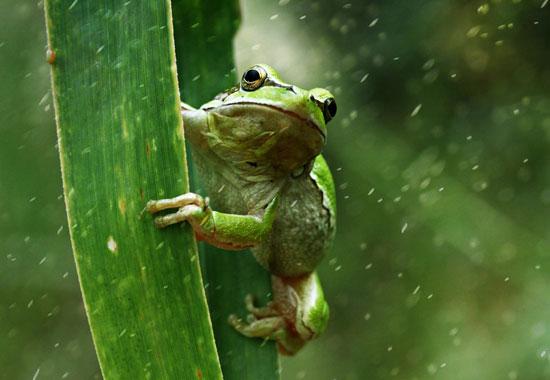 Frog-Macro-Photography