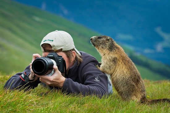 Marmot-Nature-Photography