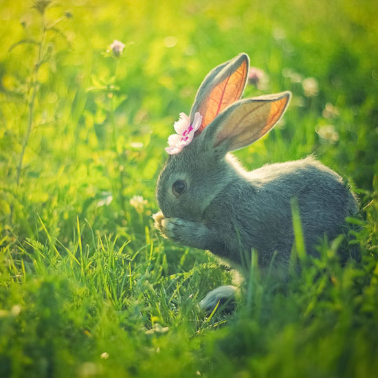 Rabbit-Nature-Photography