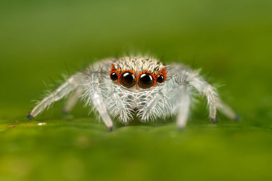 Spider-Macro-Photography