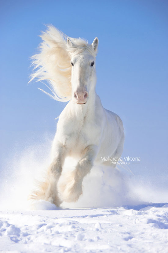 White-Horse-Photography