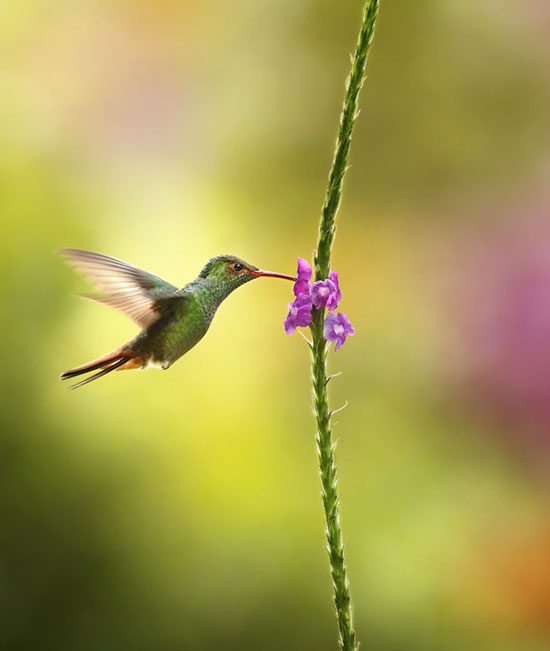 humming-bird-Breathtaking-Nature-Photography