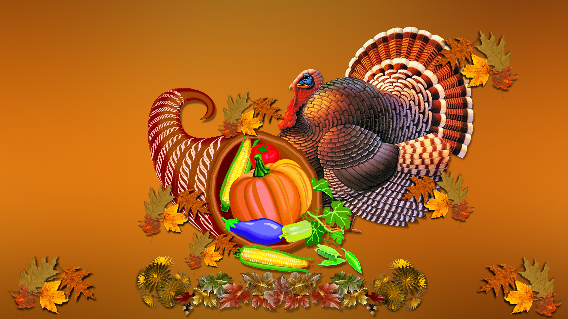 Turkey Image HD Thanksgiving Pictures Wallpaper Source