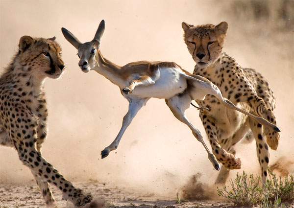 Amazing Hunt photography Great Tips For Beginners Who Want Great Wildlife Photographer