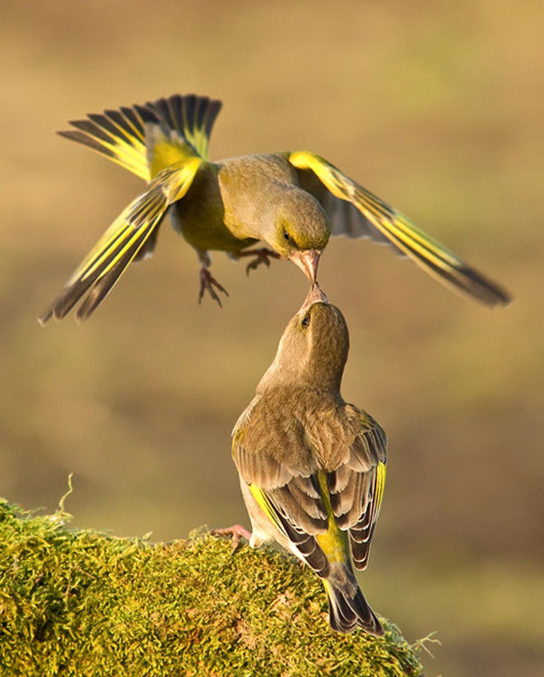 Birds-Kiss-Photography