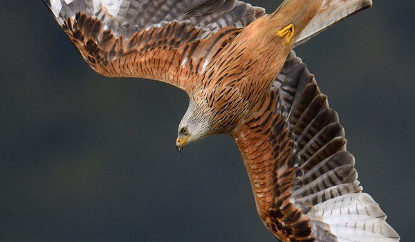 Eagle photography Great Tips For Beginners Who Want Great Wildlife Photographer