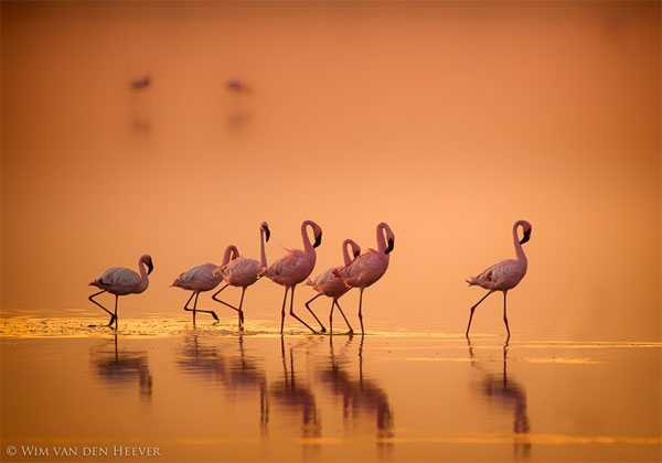 Flamingo photography Great Tips For Beginners Who Want Great Wildlife Photographer