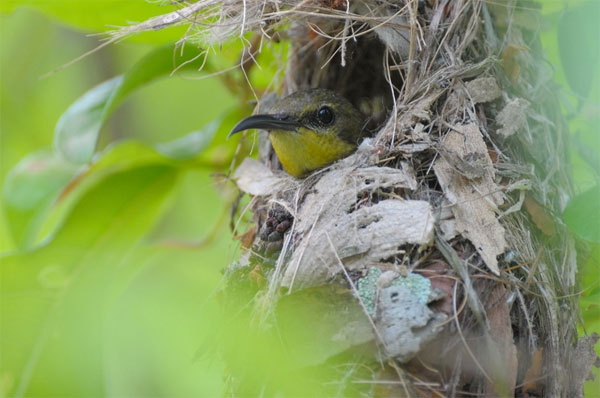 Olive backed Sunbird Great Tips For Beginners Who Want Great Wildlife Photographer