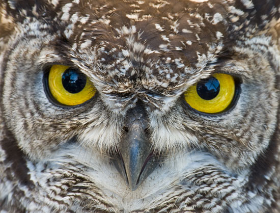 Owl-Macro-Photography