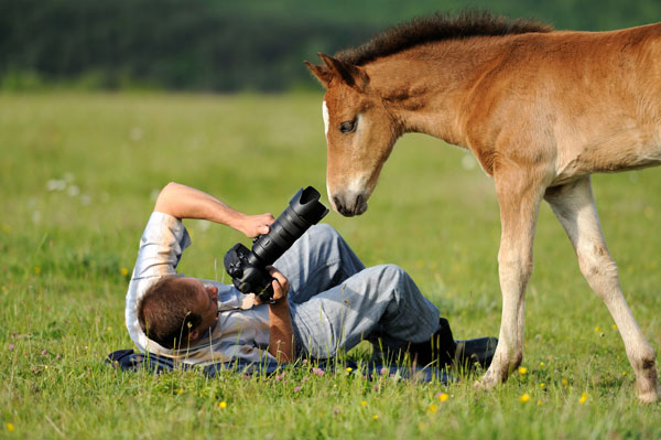 Practice Photography Great Tips For Beginners Who Want Great Wildlife Photographer