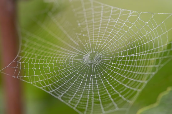 Spider-Web-Macro-Photography