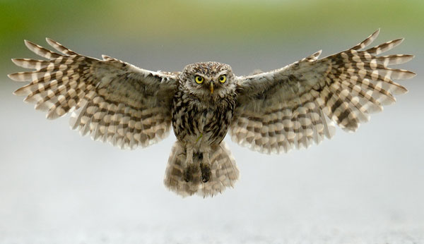 owl photography Great Tips For Beginners Who Want Great Wildlife Photographer