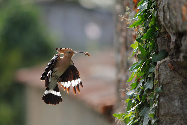 urban wildlife bird photography Great Tips For Beginners Who Want Great Wildlife Photographer