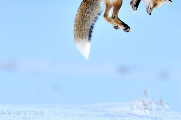 wildlife-photographer-of-the-year