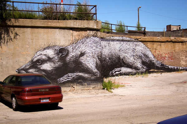 Amazing Graffiti Street Art ROA in Pilsen Chicago USA 30+ Awe Inspiring Graffiti Street Art Paintings From Around The World