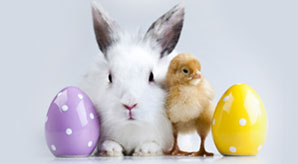 Happy-Easter-2013-Eggs,-Bunnies,-Basket-Pictures,-Images-&-Backgrounds