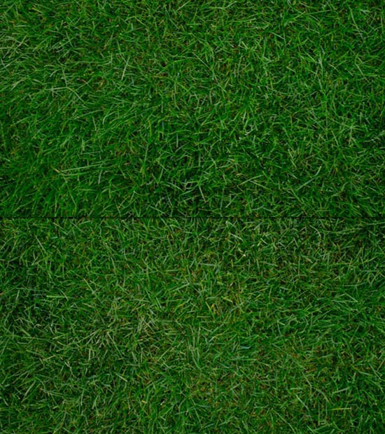 Free-High-Resolution-Grass-Texture