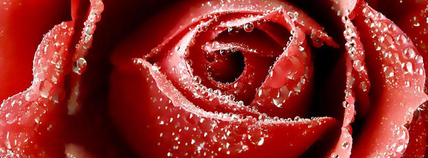 Rose-Flower-valentine-facebook-cover-photo