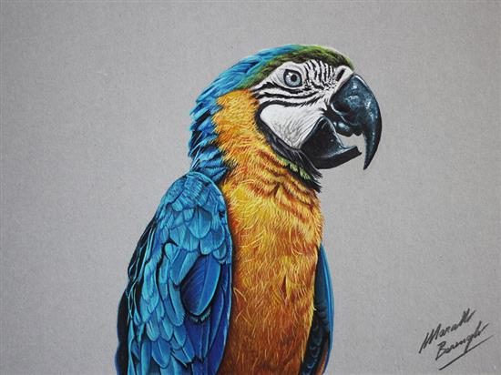 Realistic-Colored-Pencil-Drawings-by-Marcello-Barenghi (22)