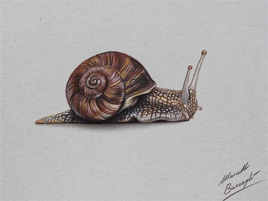 Realistic-Colored-Pencil-Drawings-by-Marcello-Barenghi (95)