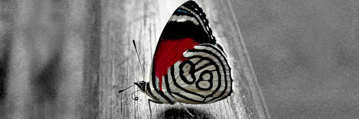 Cute-Butterfly-twitter-header-background