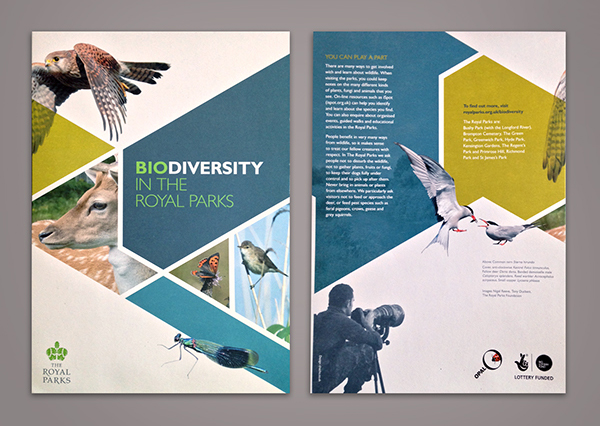 biodiversity in the royal parks beautiful brochure design