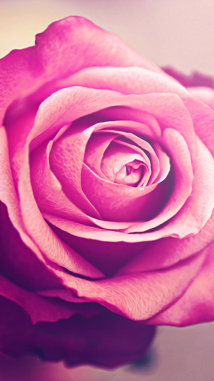 Flower-iPhone-6-Wallpaper