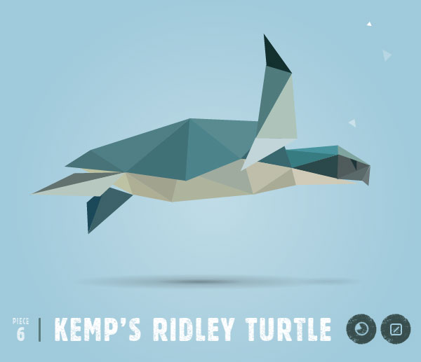 KEMPS-RIDLEY-TURTLE