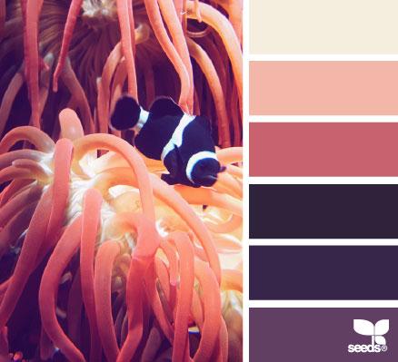 ColorDive1