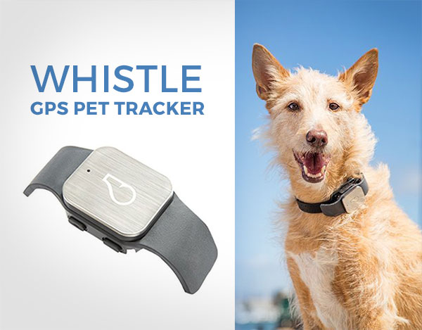 whistle-gps-pet-tracker-2