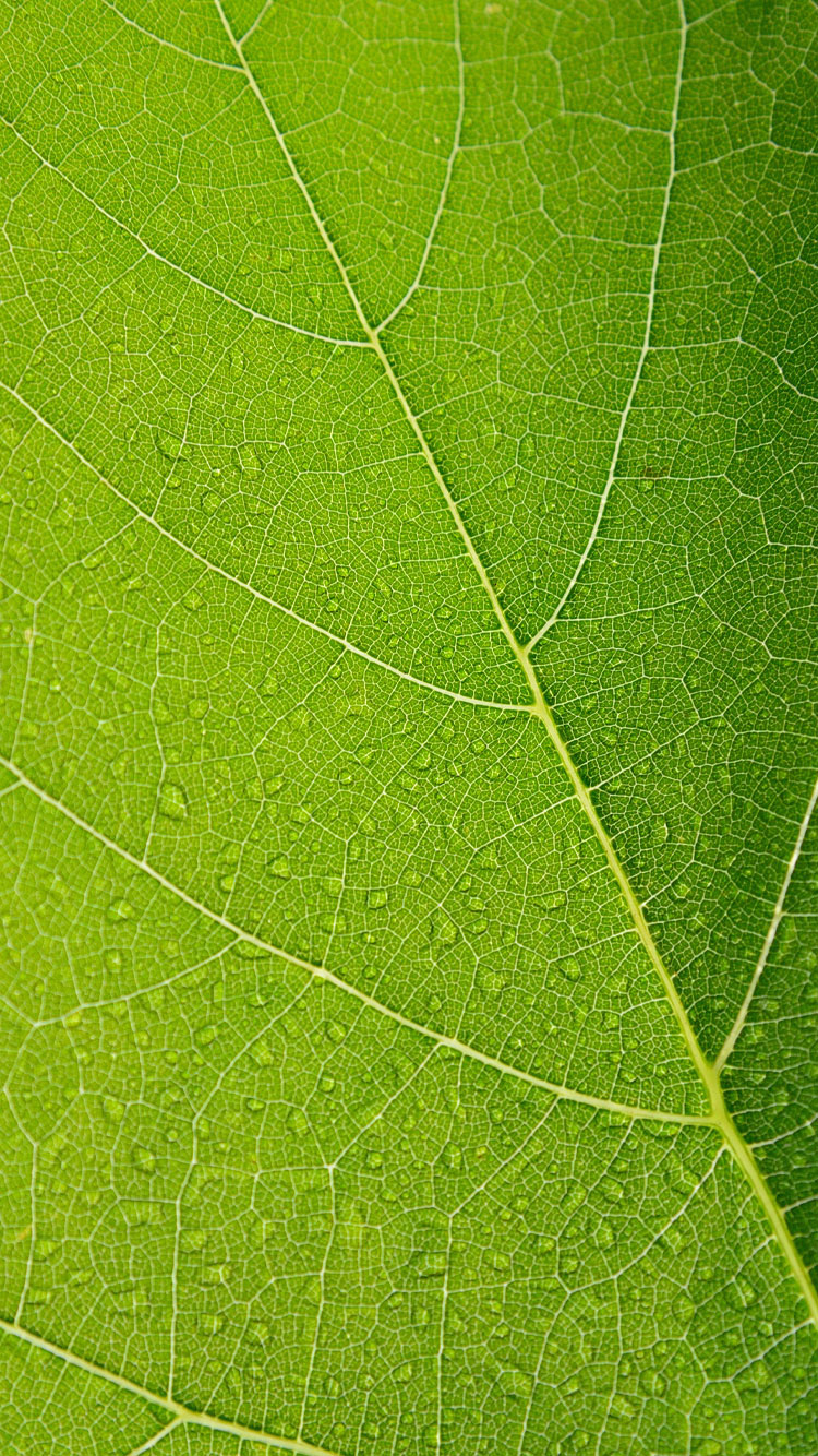 Leaf-iPhone-7-Background-HD