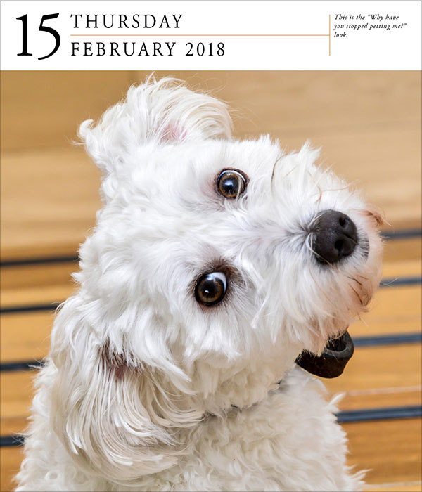Dog-Page-A-Day-Gallery-Calendar-2018-3