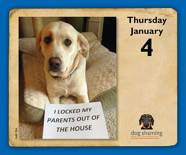 Dog-Shaming-2018-Day-to-Day-Calendar-2