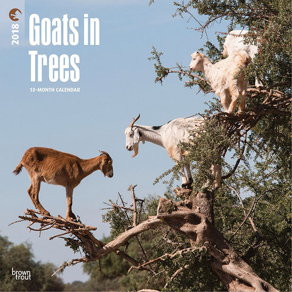 Goats-in-Trees-2018-12-x-12-Inch-Monthly-Square-Wall-Calendar