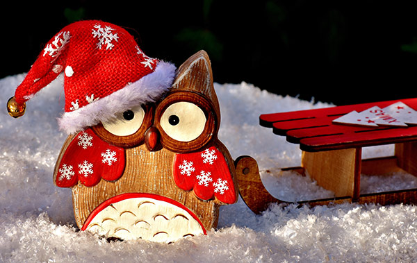 Christmas-Owl-Stock-Photo