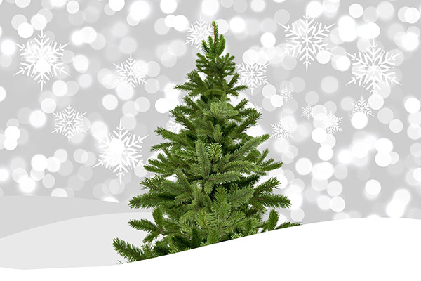 Christmas-tree-Stock-Photo