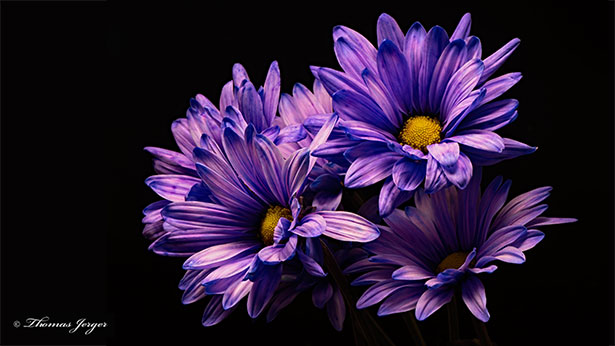 Beautiful-purple-flower-hd-wallpapers-for-landscape-monitors
