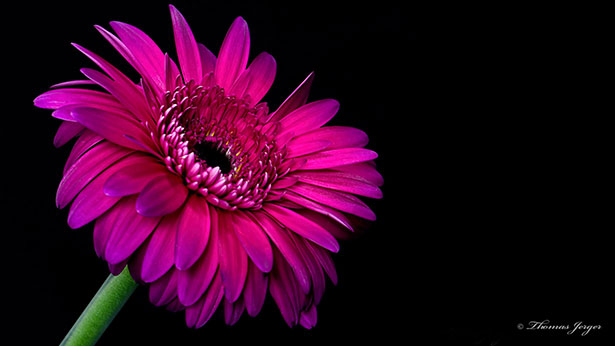 Flower-Laptop-HD-WallPaper-1920-x-1080-px