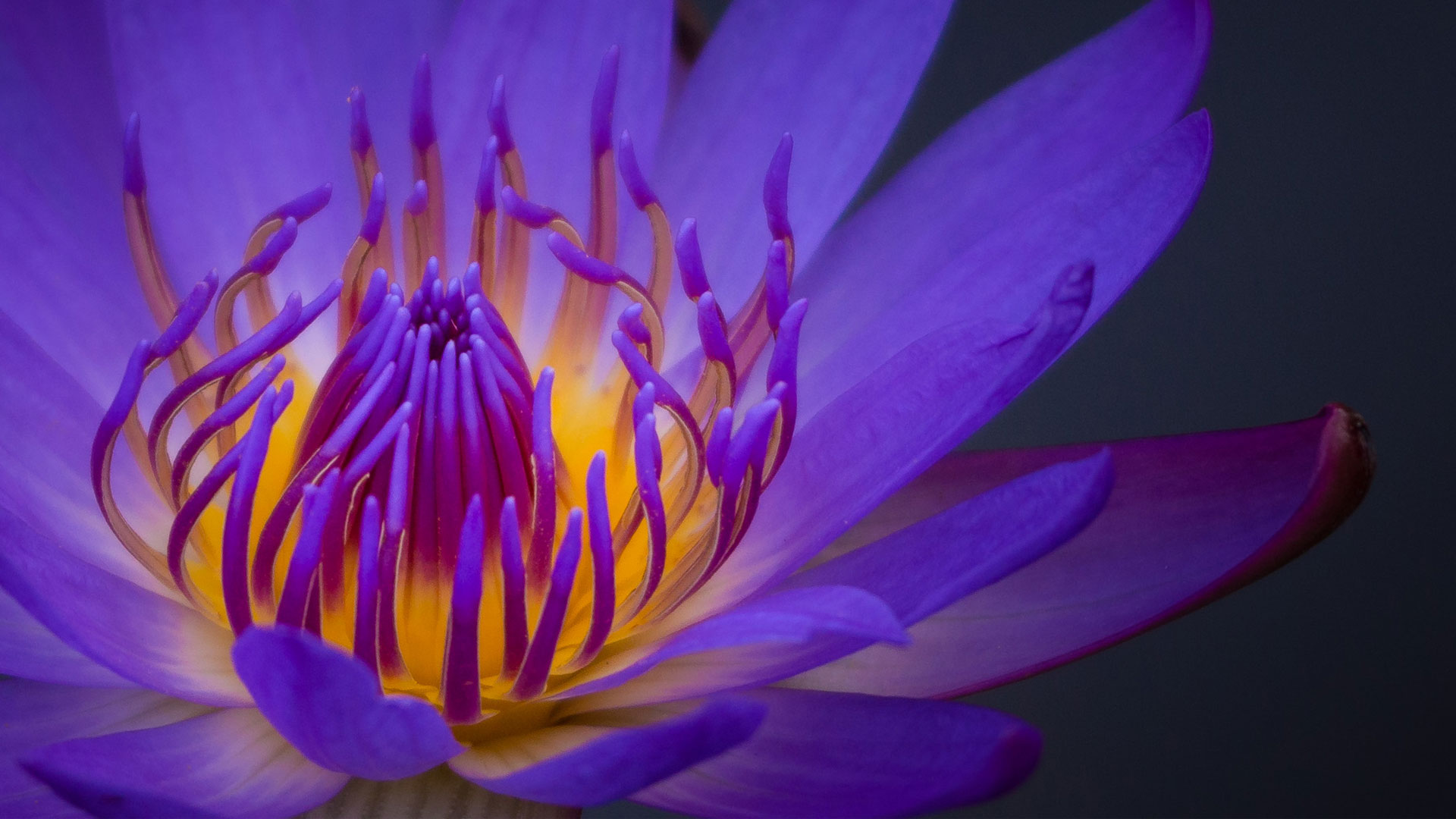 10 Beautiful High Resolution Purple Hd Wallpapers For Laptop 1920 X 1080 Px