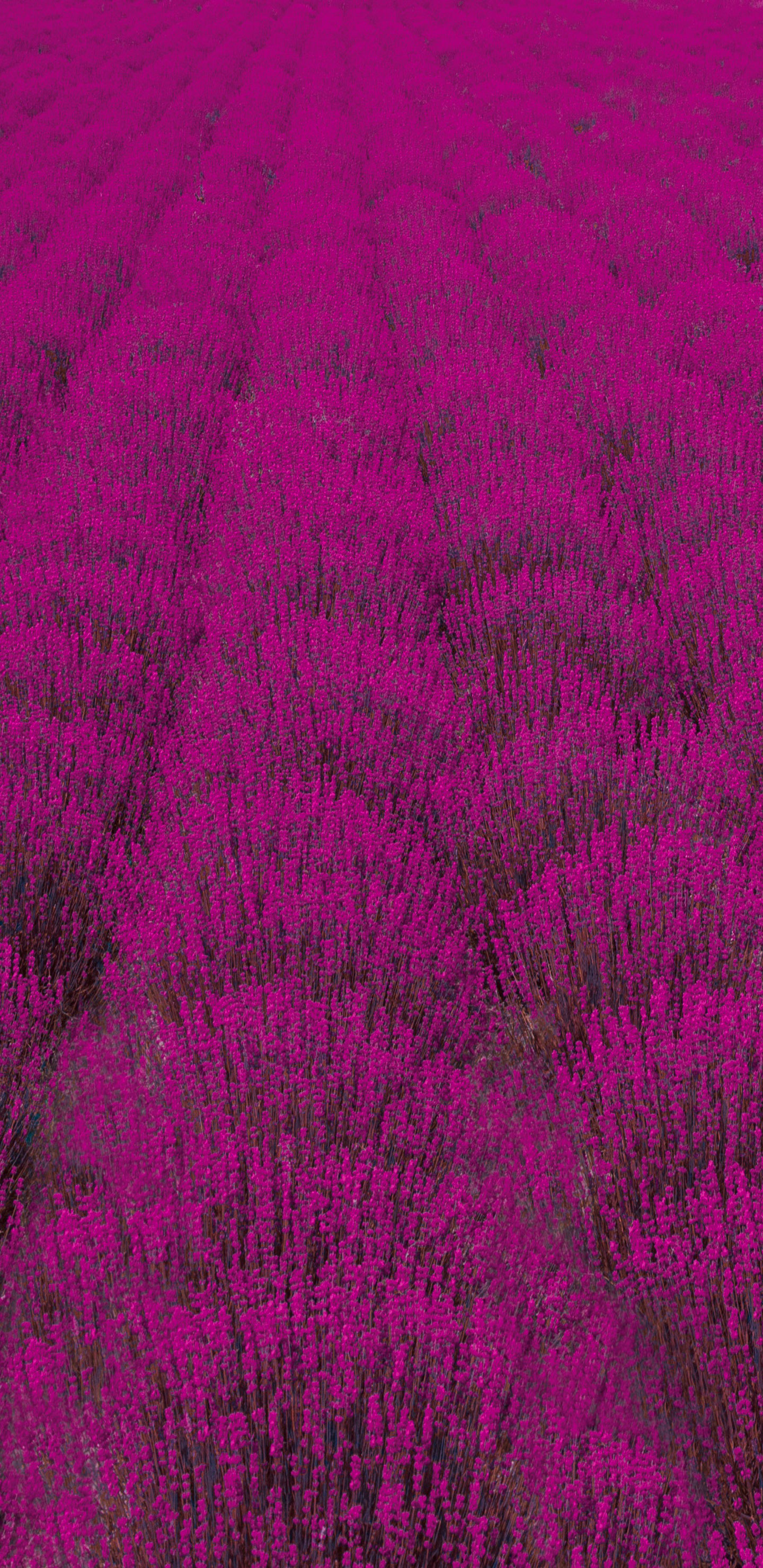 Purple-Field-S9-&-S9-Plus-Background