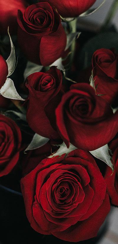 Roses-S9-&-S9-Plus-Background