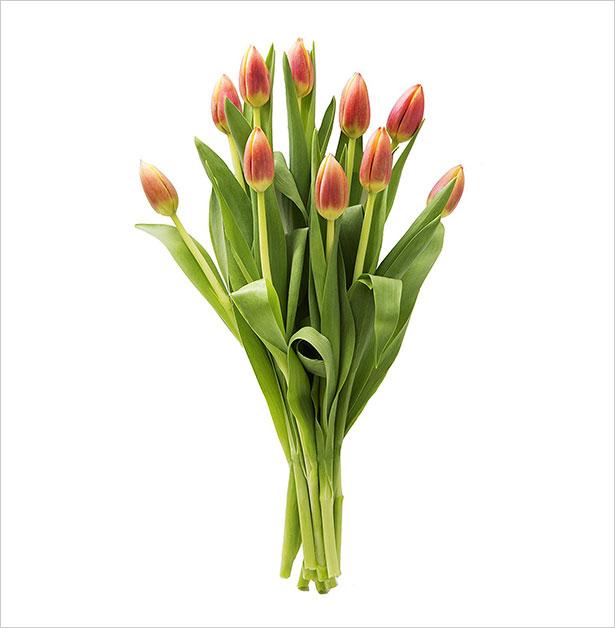 10-Orange-Tulips-Farm-Fresh-From-Holland