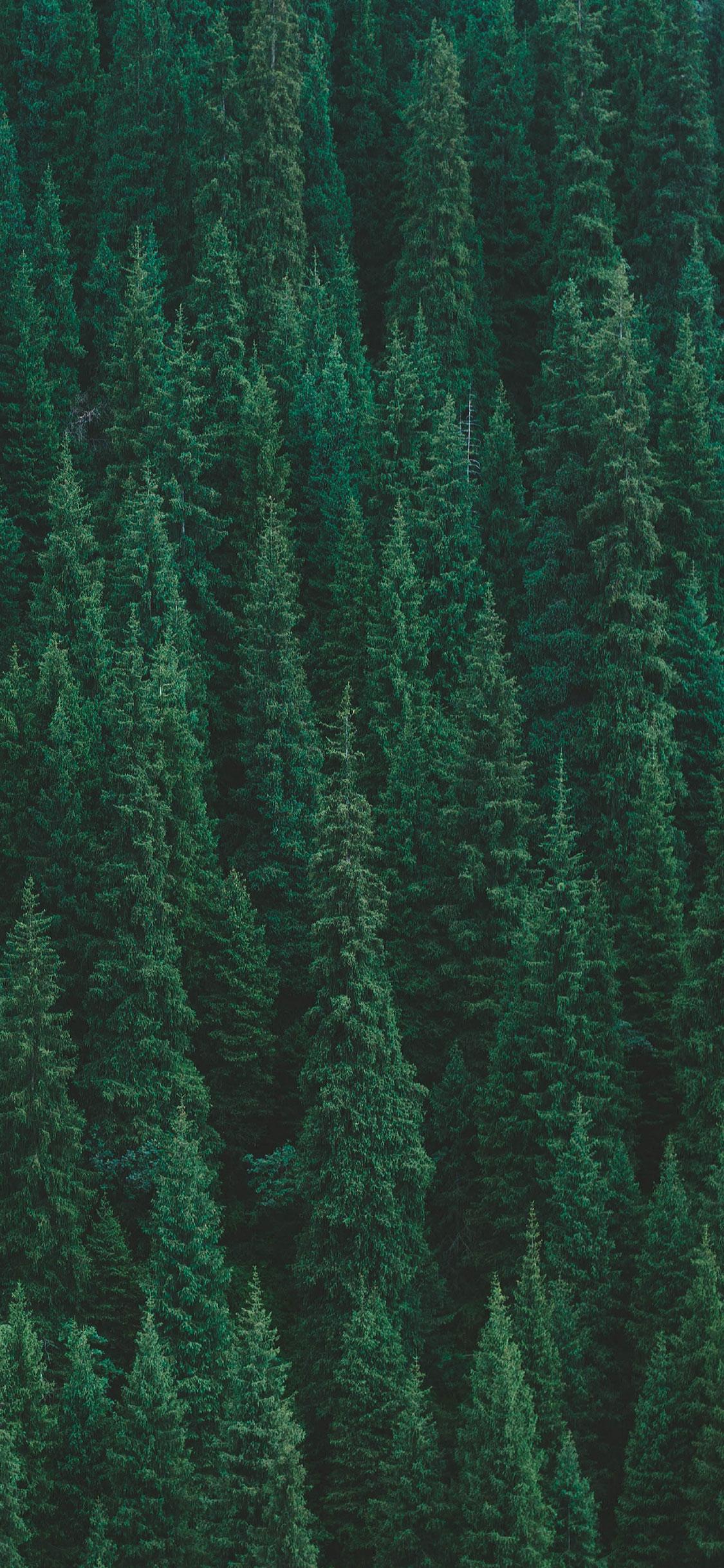 Popular Wallpaper Macbook Forest - Forest-Apple-iPhone-X-Wallpaper-1  Gallery_994170.jpg
